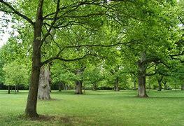 Bildresultat för vackra träd